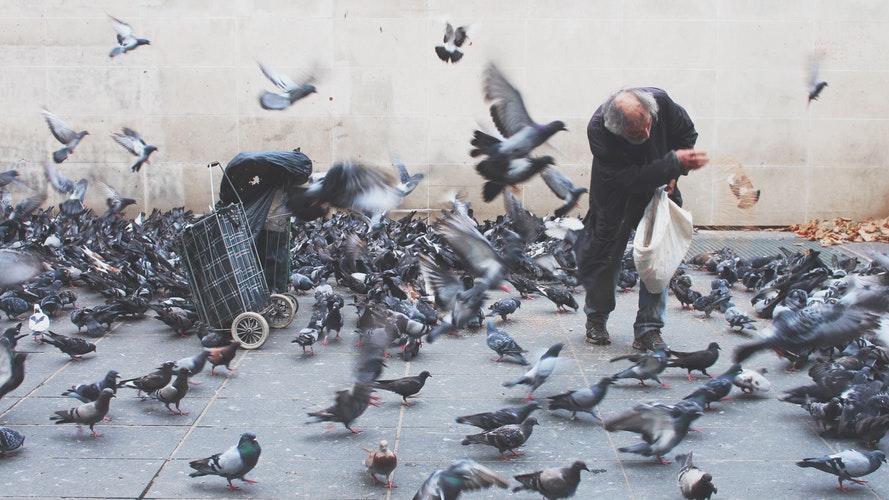 dono-piccioni
